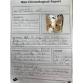 Dylan W 2B - Non-chronological report on cats