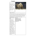 Joe 2B - Non-chronological report on camels