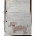 Tate 2B - Non-chronological report on puppies