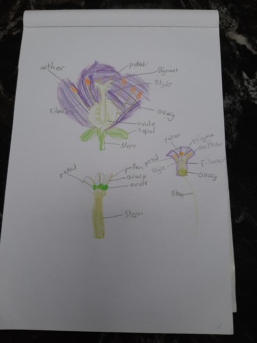 Aaron labelled the parts of a flower