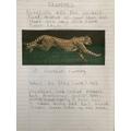 Erin 2B - Non-chronological report on cheetahs