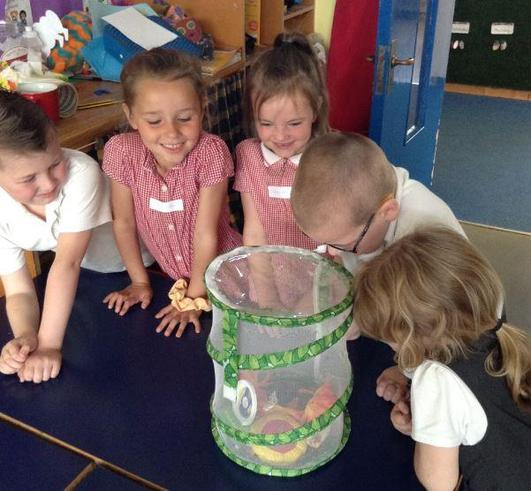 Year 1 Butterflies