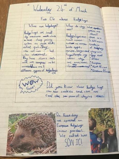 Jacob's Hedgehog Fact File