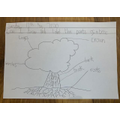 Do you know the parts of a tree? - Evie
