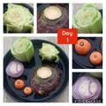 Investigating growing vegetables! - Evie