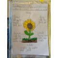 Labelling parts of a flowering plant - Evie