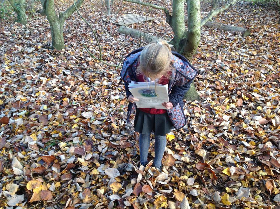 Looking at autumn leaves.