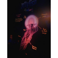 The anatomy of a Jellyfish
