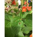 Helpful Ladybird