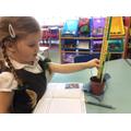 Measuring bean plants