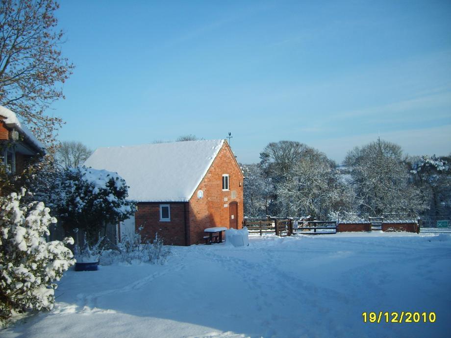 Snowy Dodford