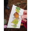 As we embarked on our long walk we were instructed to find various coloured leaves.