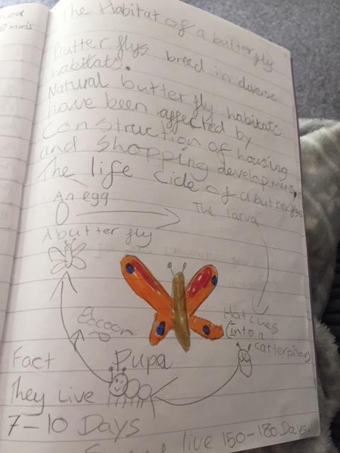 Mark's Butterfly Work