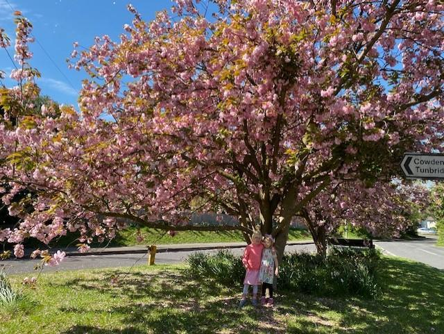 Amelie enjoying a lovely sunny walk