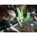 Hands on in the rock pool