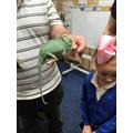 George the Chameleon
