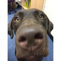 Alfie has a fantastic sense of smell!