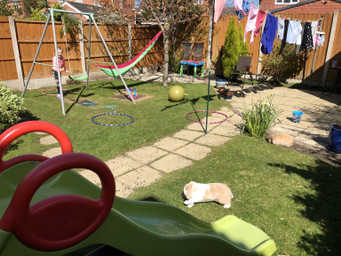 The amazing obstacle course with rabbits by Sophie