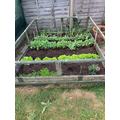 Harry has been working hard on his allotment
