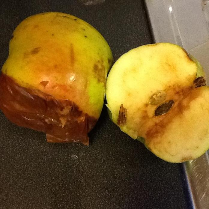 We observed how the apples changed after a few days.