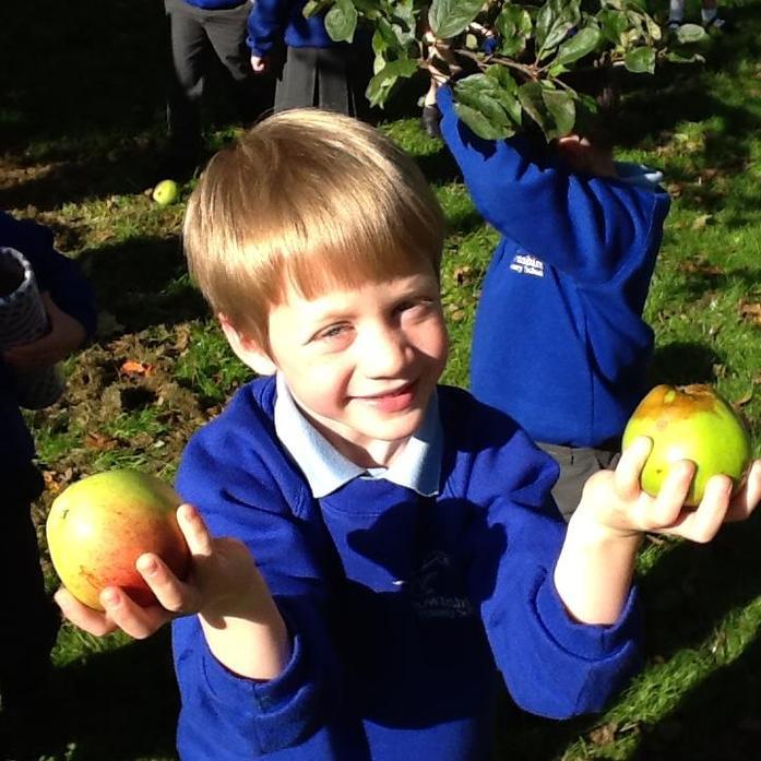 Apples growing in our school garden!
