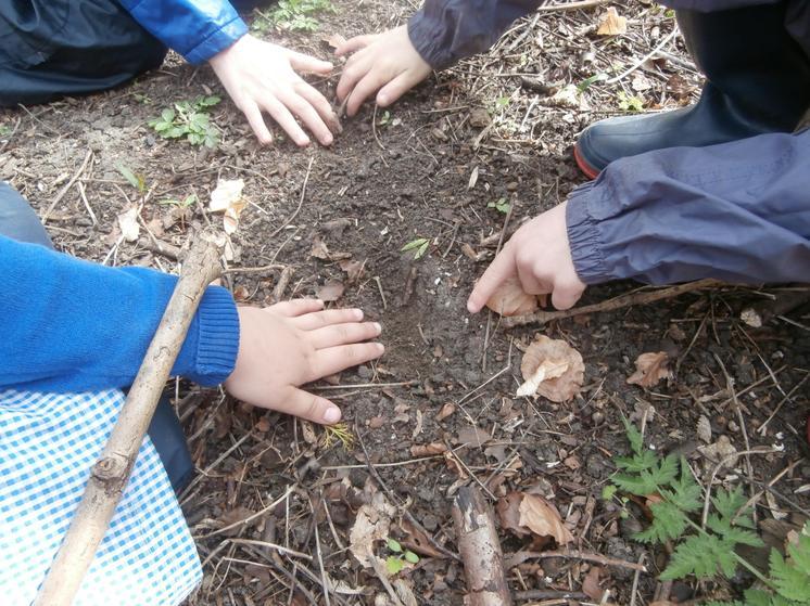 Curious scrape marks in the soil.