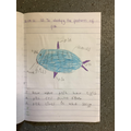 Identifying features of fish