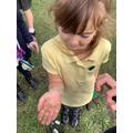 We found a caterpillar!