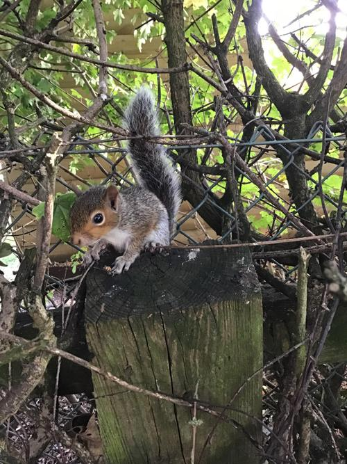 The children saw a baby squirrel today in forest school