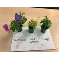 Enquiry: what do plants need to grow and stay healthy?