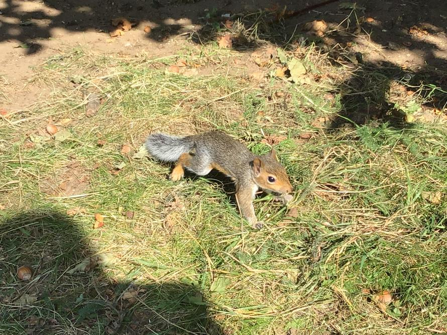 The children saw a baby squirrel in Forest School today