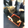 Planting carrot seeds- will the seeds or carrot tops grow faster?