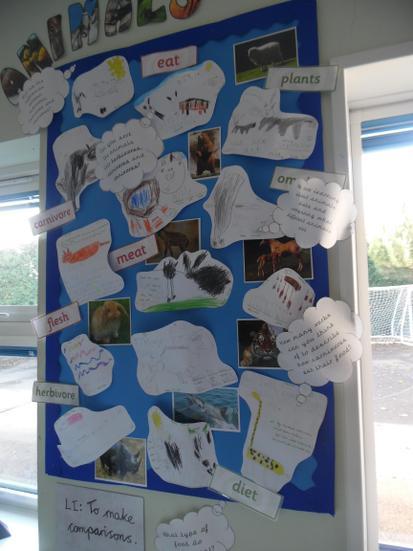 Our animal investigation corner.