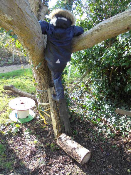 Learning how to climb trees safely