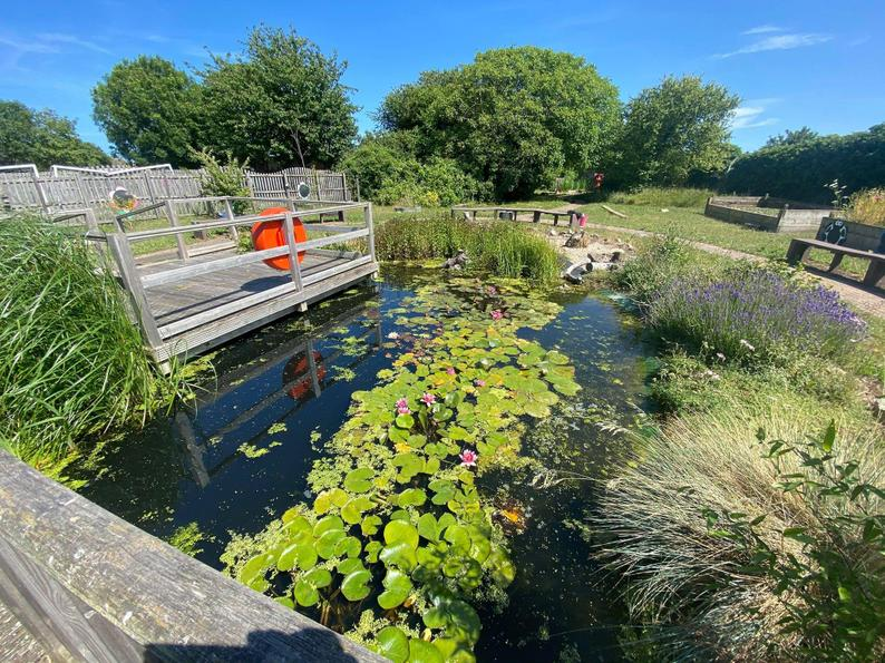 Our large pond, great for newts