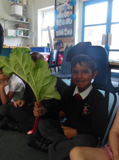 On Wednesday we ate rhubarb.