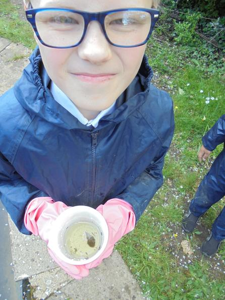Pond dipping for pond snails