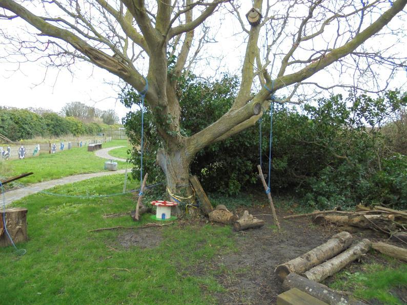 The swinging and climbing tree