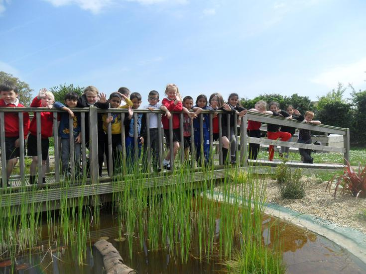 Flamingo class watched the froglet release.
