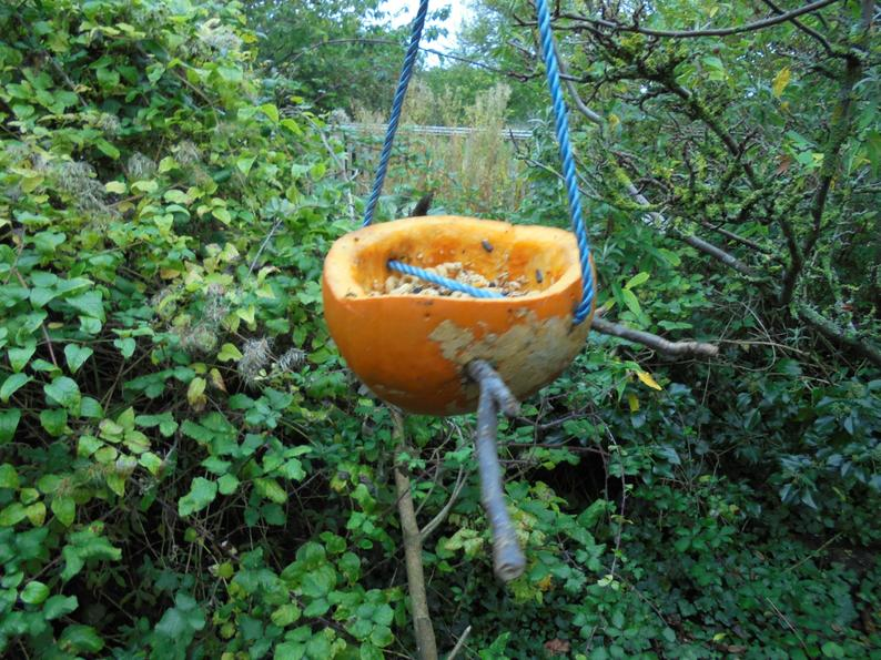 Our bird feeders all finished