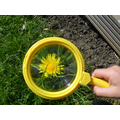 Looking at flowers using a magnifying glass.