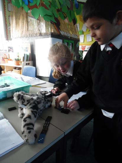 How many cubes long is the tiger?