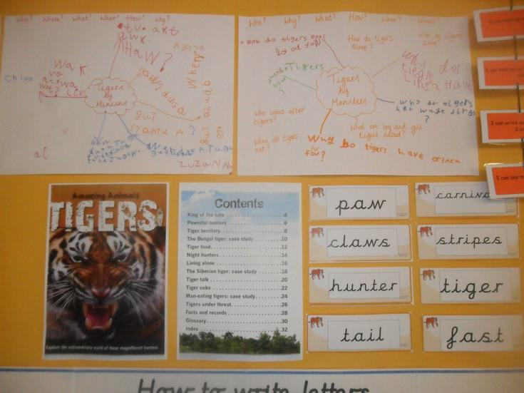 We create a mind map of questions about tigers.