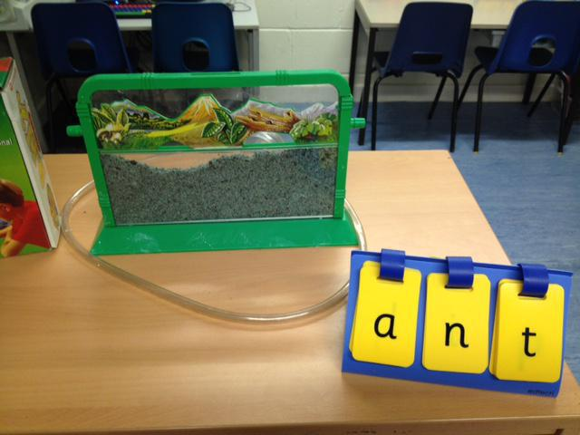 We have started creating our Ant World!