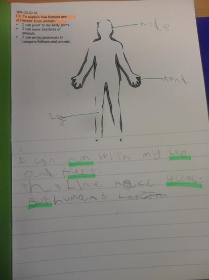 Comparing human and animal body parts.