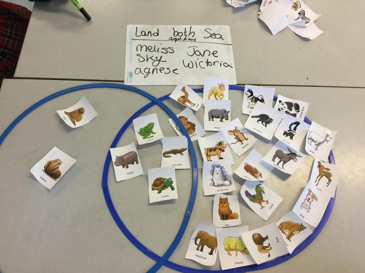 Can you see how we sorted the animals?