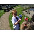 Examining a daisy.