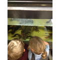 Looking closely at the crocodile