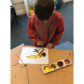 Observational paintings of the chicks