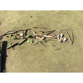 Check out our dinosaur skeleton.